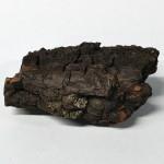 bark-blackwalnut-small-019-top